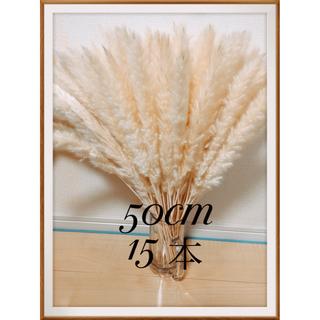 ♡50cm 15本♡ パンパスグラス テールリード(ドライフラワー)
