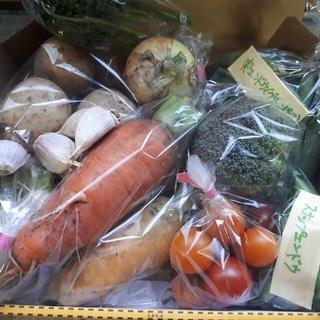 お任せお楽しみ野菜詰め合わせコンパクトセット 農家直送(野菜)