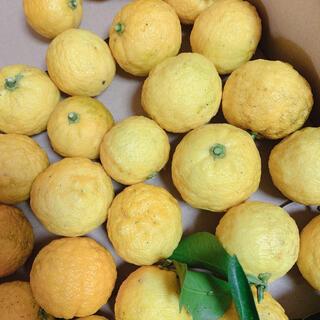 無農薬‥新鮮な柚子