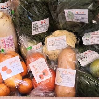 お得な野菜セット100サイズ 送料無料(野菜)