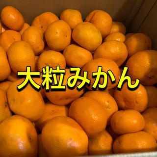 愛媛県産 訳あり 大粒 みかん 約13kg ミカン 蜜柑