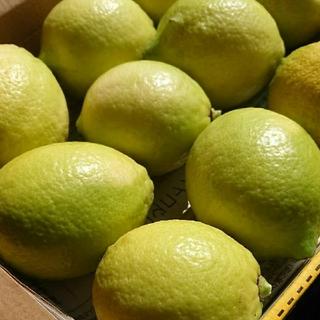産地直送!   (無農薬)  レモン