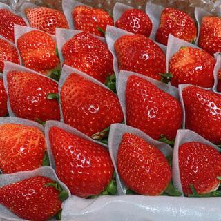 ◡̈いちごさん◡̈ イチゴ 苺
