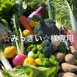 野菜BOX Lサイズ ☆みっきい☆様専用(野菜)