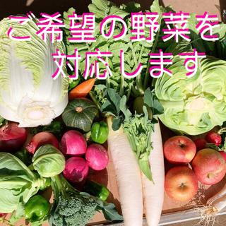 無農薬栽培新鮮野菜 蜜入りリンゴ付き(野菜)
