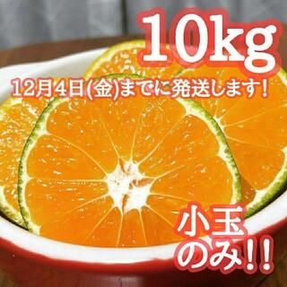 9評価実績1300件!コスパ◎早生みかん 10kg ミカン農家直送(フルーツ)