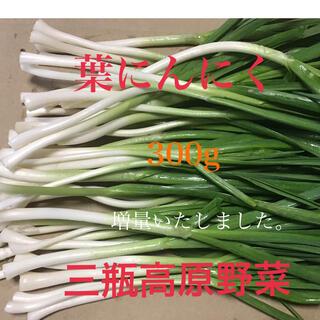 葉にんにく 300g 朝採り新鮮 島根の高原野菜(野菜)