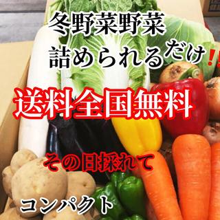 激安❗️農家直送野菜コンパクト入る分だけ詰めます送料無料