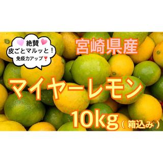 希少❣️マイヤーレモン10 kg(送料込み)(フルーツ)