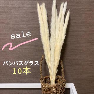 【お値下げ!】パンパスグラス10束 大人気 インテリア ドライフラワー