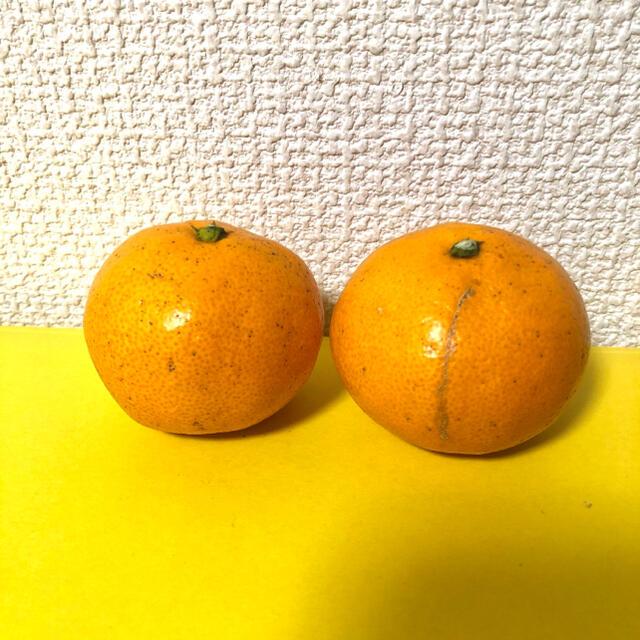 和歌山県産 有田みかん 10kg Mサイズ 家庭用 食品/飲料/酒の食品(フルーツ)の商品写真