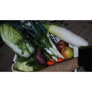 野菜詰め合わせ 100サイズ