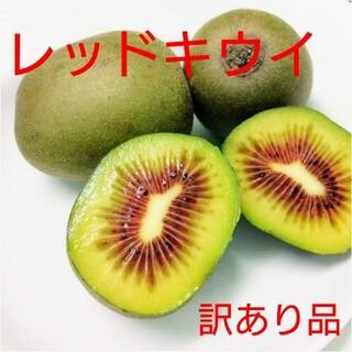jyunmayu様専用訳あり!広島県大崎下島産 レッドキウイ1キロ(フルーツ)