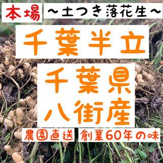 千葉県八街産 落花生 千葉半立 土つき 250g