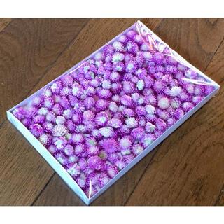 お花屋さんが作ったピンクだらけの千日紅200個お詰め合わせです‼️(ドライフラワー)