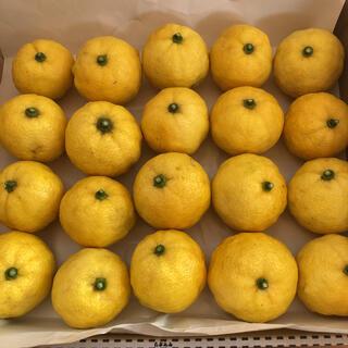 無農薬 柚子 ゆず 黄色 20個
