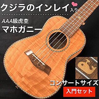 【Kmise】カーリー・マホガニー製 コンサート・ウクレレ【入門セット】(その他)
