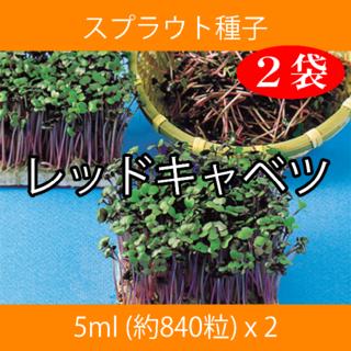 スプラウト種子 S-02 レッドキャベツ 5ml 約840粒 x 2袋(野菜)