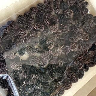 オオバヤシャブシの実 150個 熱湯消毒 天日干し済み(ドライフラワー)