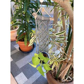 マクラメ プラントハンガー 流木(プランター)