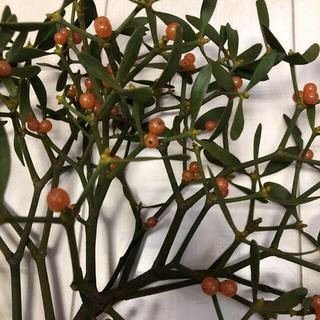 ヤドリギ  オレンジ、黄色30センチ(ドライフラワー)