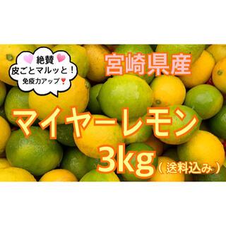 希少❣️マイヤーレモン3 kg(送料込み)(フルーツ)
