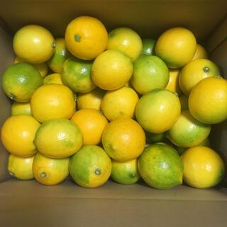 国産レモン 話題のマイヤーレモン5kg 36個位無農薬!訳あり(フルーツ)