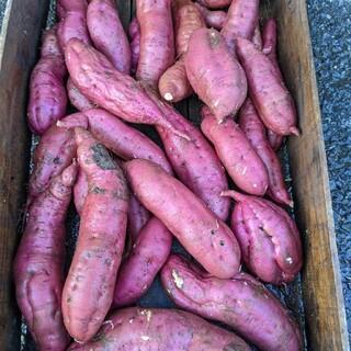 ジョゼ様  専用  さつまいも  約8〜10㌔  無農薬栽培(野菜)