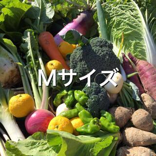野菜BOX Mサイズ (野菜)