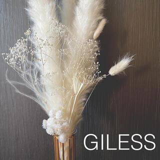 パンパスグラス テールリード オールホワイト インテリア スワッグ 北欧 韓国(ドライフラワー)