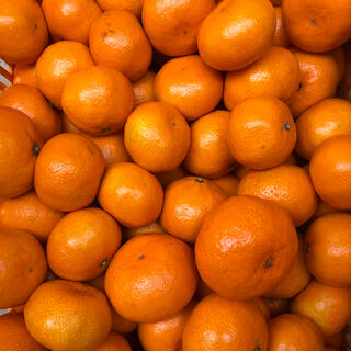 広島県産 みかん 蜜柑 5kg  産地直送 送料無料(フルーツ)