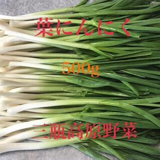 葉にんにく 500g 朝採り新鮮 島根の高冷地野菜(野菜)