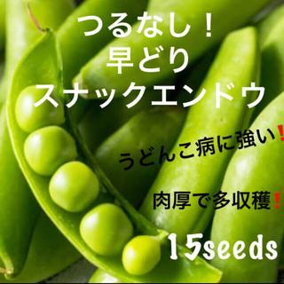 早どり! つるなし! スナックエンドウ 種15粒(野菜)
