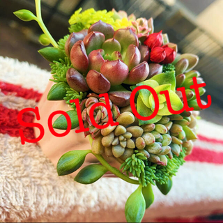 ❤︎多肉植物 ピンクのココット寄植え❤︎このまま発送(その他)