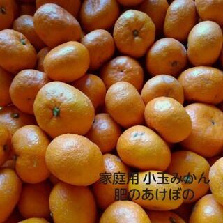 熊本みかん 肥のあけぼの 家庭用小玉 3キロ(フルーツ)