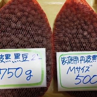 兵庫県産 丹波黒黒豆 2Lサイズ&Mサイズ(野菜)
