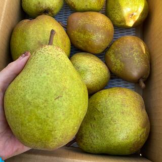減農薬栽培山形産 山形うまれ!特大!高級洋梨シルバーベルバラ詰め3キロ(フルーツ)