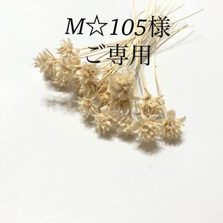 M☆105様ご専用ページです(ドライフラワー)