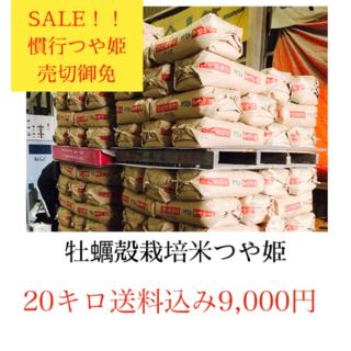 年末セール✼光り輝く大粒米✼宮城県産つや姫20キロ(米/穀物)