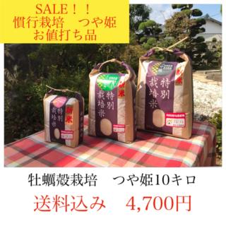 年末セール✼光り輝く大粒米✼宮城県産つや姫10キロ(米/穀物)
