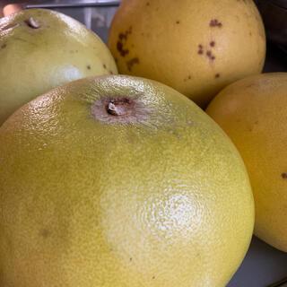 晩白柚(ばんぺいゆ)              3玉  RY53(フルーツ)