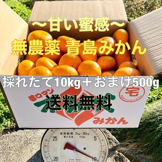 無農薬 不知火町の青島みかん 10kg+500gおまけ(フルーツ)