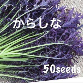 今からでも間に合う! ドドーンっと! アントシアニンリッチ 紫からし菜 種50粒(野菜)
