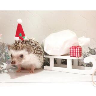 小動物 サンタの帽子(おもちゃ/ペット小物)