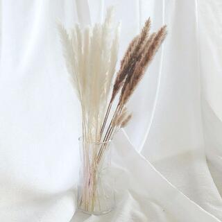 天然パンパスグラス20本テールリード [ホワイト+ブラウン]ドライフラワー(ドライフラワー)