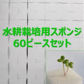 ★無農薬 水耕栽培!十字切れ目入りスポンジ(2.5×2.5cm) 60株分(野菜)
