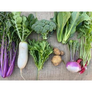 農薬不使用のお野菜セット お試し8品60サイズ 【綾善farm】(野菜)