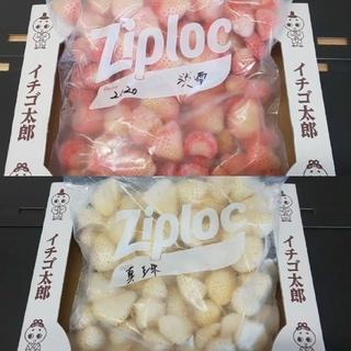 あゆ様専用 冷凍イチゴ 真珠姫&淡雪 各1キロセット(フルーツ)