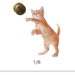 ストレス解消に!爪とぎ猫ボール(猫)