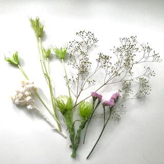 ドライフラワー 花材 詰め合わせ ニゲラ シルバーデイジー かすみ草 スターチス(ドライフラワー)